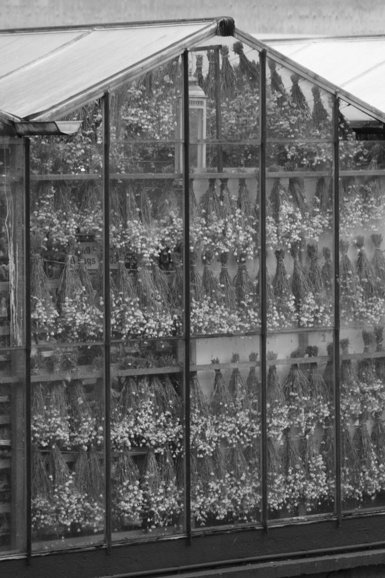 flowers amsterdam