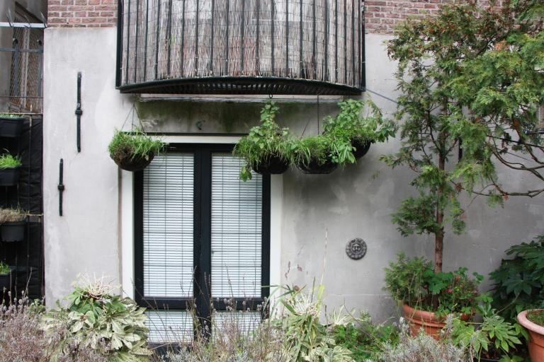 plants walls amsterdam